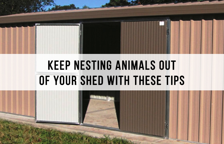 Animals Out Of Your Shed